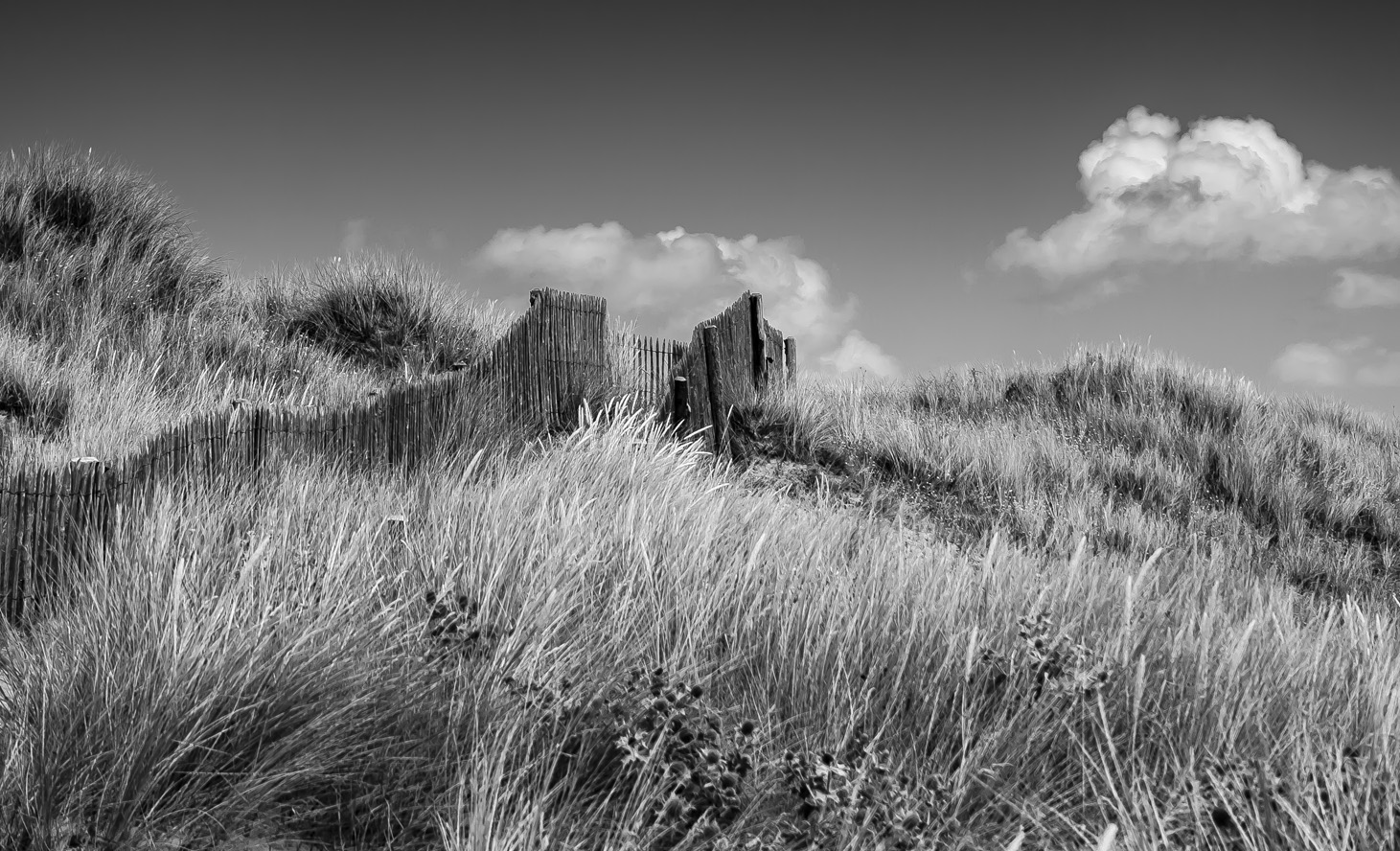 Dunes Cotentin